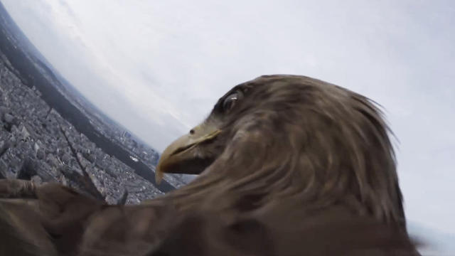 3037185-inline-1280-eagleparis-gopro
