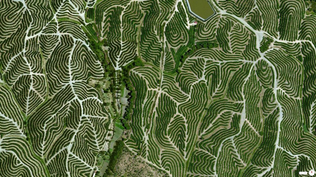 vineyards-swirl-on-the-hills-of-huelva-spain-the-climate-there-is-ideal-for-grape-growing-with-an-average-temperature-of-64-degrees-and-a-relative-humidity-between-60-and-80
